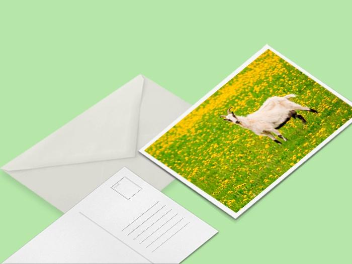 Carte postale recyclé